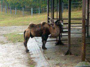 Poznan Zoo Bier-Traveller (15)