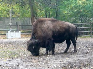 Poznan Zoo Bier-Traveller (17)