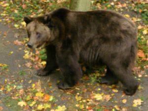 Poznan Zoo Bier-Traveller (9)